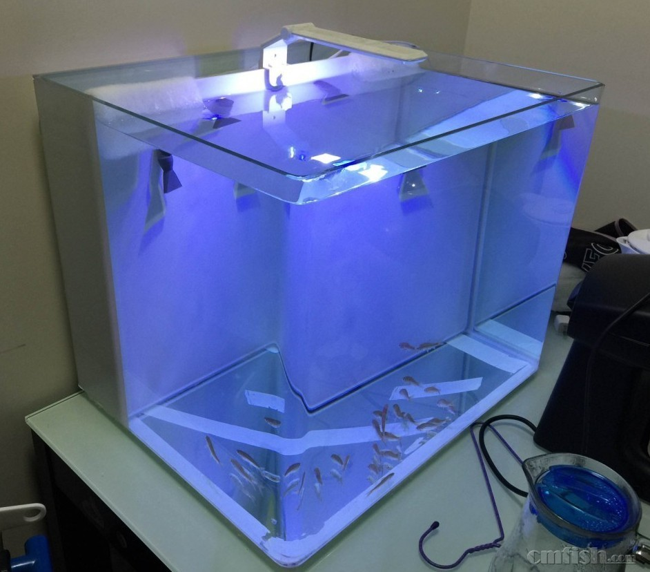 60海水缸底滤设计图